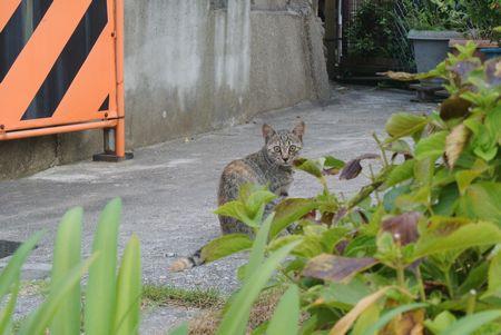 ひだまり 子猫.jpg
