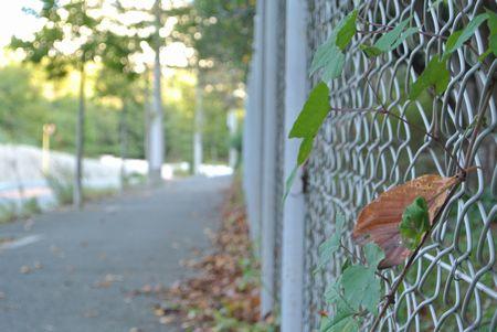 ひだまり 枯れ葉2.jpg