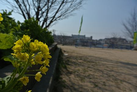 ひだまり 菜の花.jpg