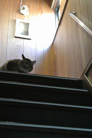 ひだまり 階段ふう.jpg