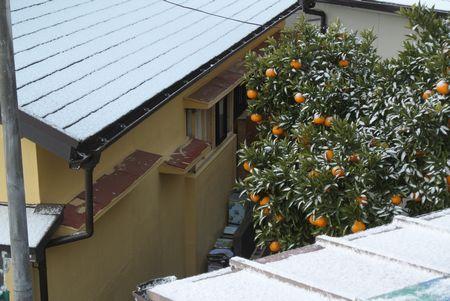 ひだまり 雪 みかん.jpg