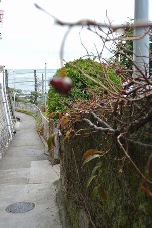 朝散歩 木の実.jpg