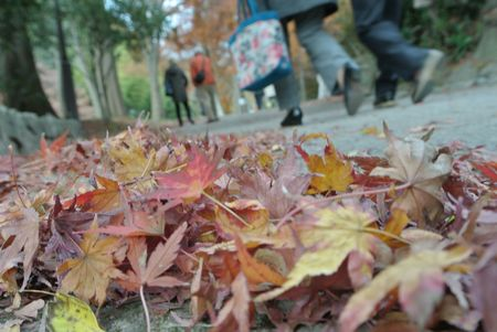 登山日和 紅葉.jpg