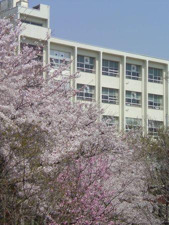 2011さくら 小学校.jpg